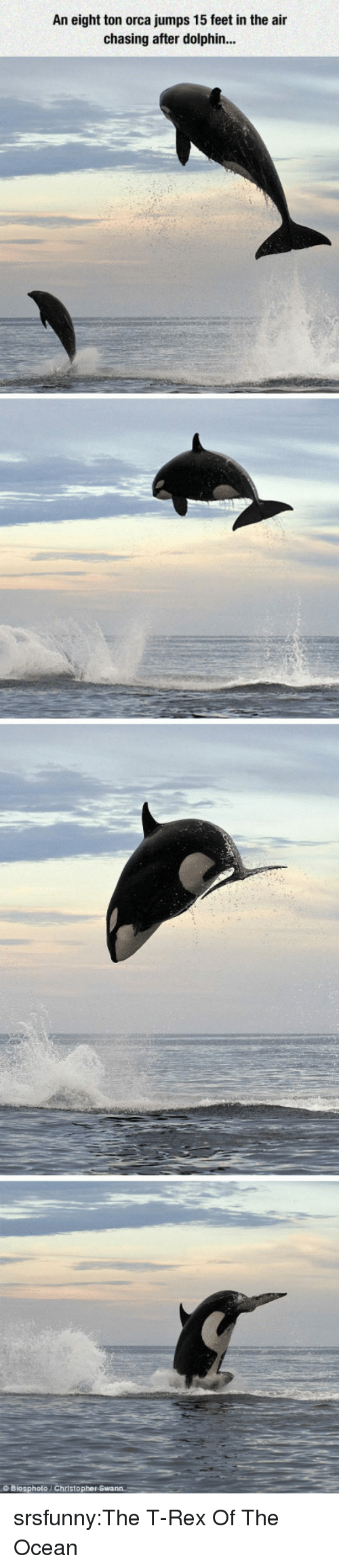 orca: An eight ton orca jumps 15 feet in the air  chasing after dolphin..  Biosphoto/ Christop srsfunny:The T-Rex Of The Ocean