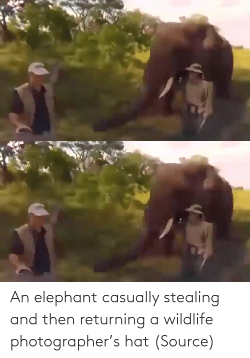 Target: An elephant casually stealing and then returning a wildlife photographer's hat (Source)