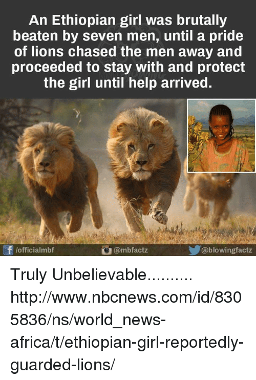 Ethiopians: An Ethiopian girl was brutally  beaten by seven men, until a pride  of lions chased the men away and  proceeded to stay with and protect  the girl until help arrived  /officialmbf  ambfactz  ablowingfactz Truly Unbelievable.......... http://www.nbcnews.com/id/8305836/ns/world_news-africa/t/ethiopian-girl-reportedly-guarded-lions/