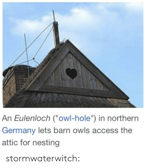 "nesting: An Eulenloch (owl-hole"") in northern  Germany lets barn owls access the  attic for nesting stormwaterwitch:"