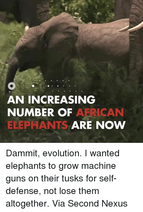 Tusk: AN INCREASING  NUMBER OF  A RICAN  ELEPHANTS  ARE NOW Dammit, evolution. I wanted elephants to grow machine guns on their tusks for self-defense, not lose them altogether.  Via Second Nexus