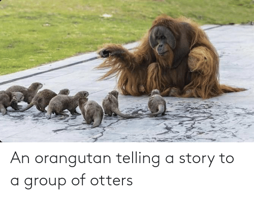 Otters: An orangutan telling a story to a group of otters
