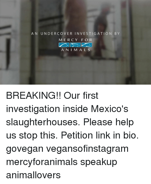 Ÿ˜': AN UNDERCOVER INVESTIGATION BY  M E R C Y FOR  A N I M A L S BREAKING!! Our first investigation inside Mexico's slaughterhouses. Please help us stop this. Petition link in bio. govegan vegansofinstagram mercyforanimals speakup animallovers