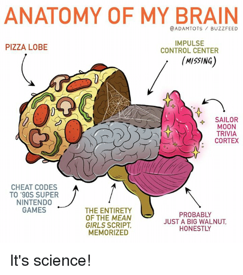 Mooned: ANATOMY OF MY BRAIN  @ADAMTOTS BUZZFEED  PIZZA LOBE  IMPULSE  CONTROL CENTER  (MISSING  4 SAILOR  MOON  TRIVIA  CORTEX  CHEAT CODES  TO '90S SUPER  NINTENDO  GAMES  THE ENTIRETY  OF THE MEAN  GIRLS SCRIPT,  MEMORIZED  PROBABLY  JUST A BIG WALNUT  HONESTLY It's science!