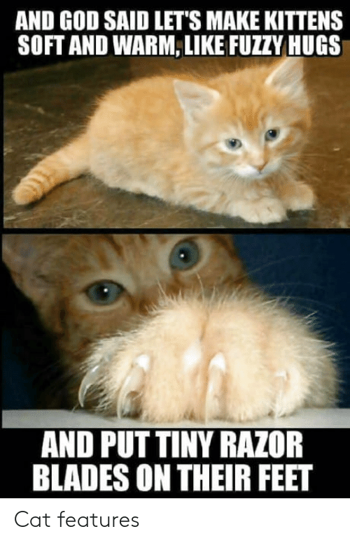 razor blades: AND GOD SAID LET'S MAKE KITTENS  SOFT AND WARM, LIKE FUZZY HUGS  AND PUT TINY RAZOR  BLADES ON THEIR FEET Cat features