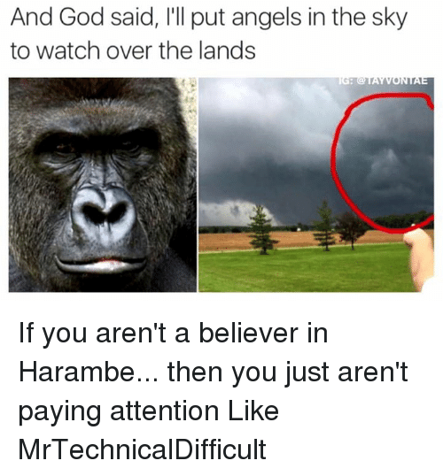 Mrtechnicaldifficult: And God said, l'll put angels in the sky  to watch over the lands If you aren't a believer in Harambe... then you just aren't paying attention  Like MrTechnicalDifficult