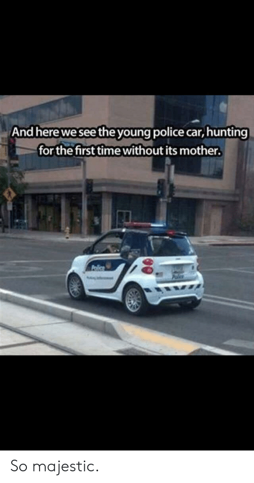 Police Car: And here we see the young police car, hunting  for the first time without its mother. So majestic.