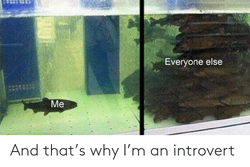 an introvert: And that's why I'm an introvert