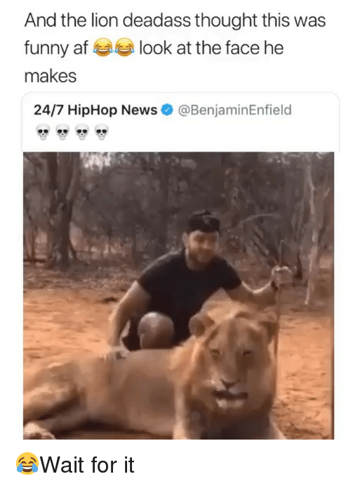 Hiphop: And the lion deadass thought this was  funny af look at the face he  makes  24/7 HipHop News  @BenjaminEnfield 😂Wait for it