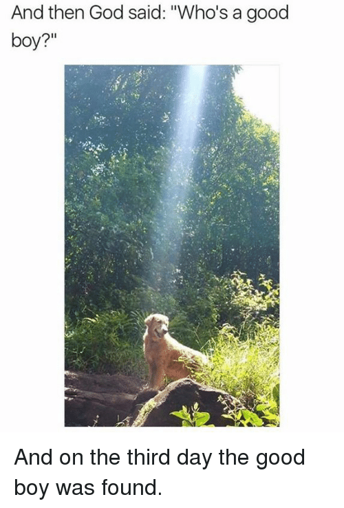 """third day: And then God said: """"Who's a good  boy? And on the third day the good boy was found."""