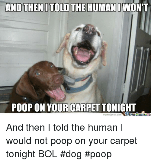 Dog Has Diarrhea On Rug: And THEN I TOLD THE HUMAN IWONT POOP ON YOUR CARPET