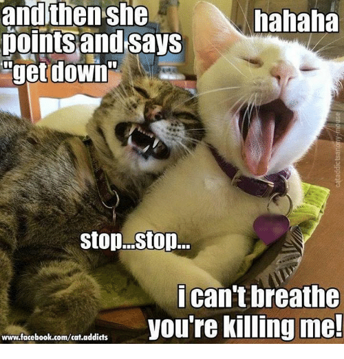 youre killing me: and then she  hahaha  pointsand says  get down  Stop...stop...  i can't breathe  you're killing me!  www.facebook.com/cat.addicts