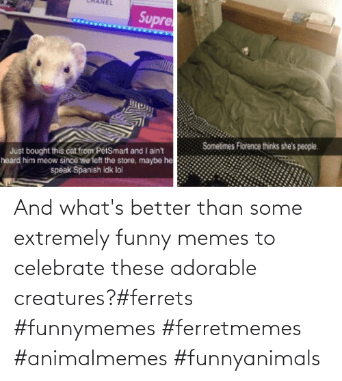 celebrate: And what's better than some extremely funny memes to celebrate these adorable creatures?#ferrets #funnymemes #ferretmemes #animalmemes #funnyanimals