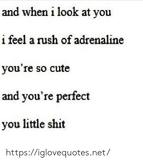 look at you: and when i look at you  i feel a rush of adrenaline  you're so cute  and you're perfect  you little shit https://iglovequotes.net/