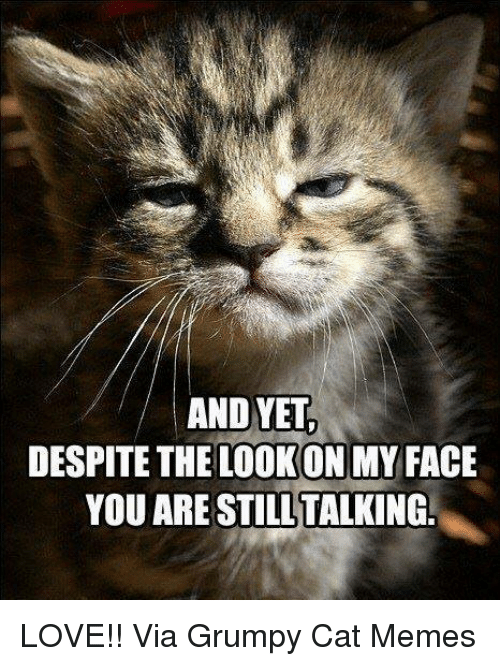 Grumpy Cats: AND YET  DESPITE THE LOOKONMY FACE  YOU ARE STILL TALKING. LOVE!! Via Grumpy Cat Memes