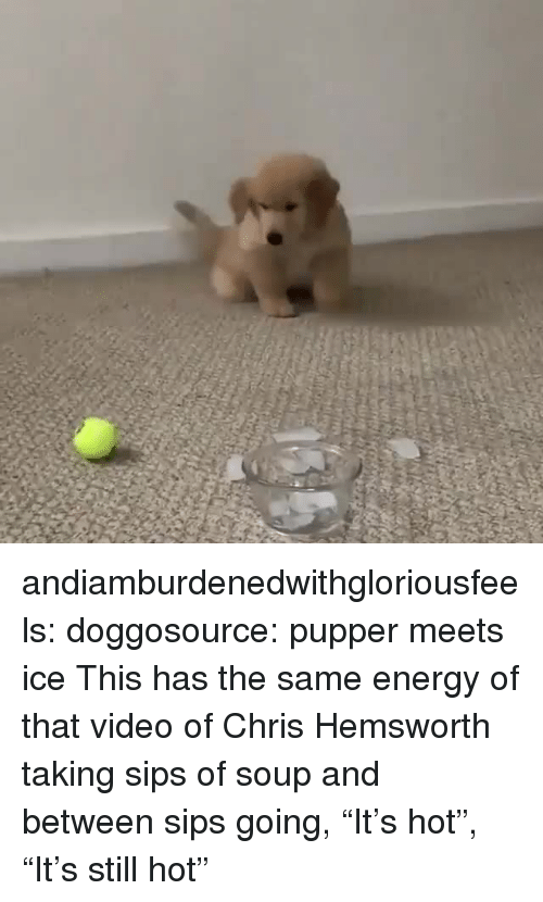 "Chris Hemsworth: andiamburdenedwithgloriousfeels:  doggosource: pupper meets ice This has the same energy of that video of Chris Hemsworth taking sips of soup and between sips going, ""It's hot"", ""It's still hot"""