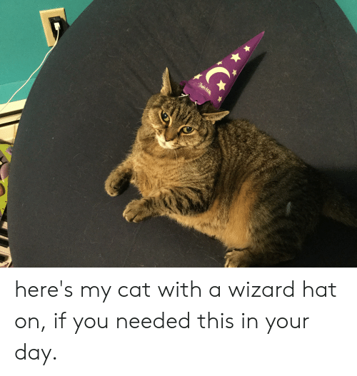 andie: Andie Mc here's my cat with a wizard hat on, if you needed this in your day.