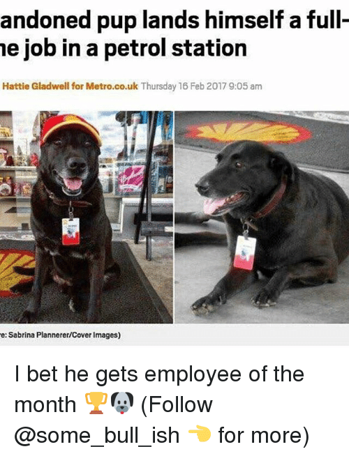 I Bet, Memes, and Images: andoned pup lands himself a full-  he job in a petrol station  Hattie Gladwell for Metro.co.uk Thursday 16 Feb 20179:05 am  e: Sabrina Plannerer/Cover Images) I bet he gets employee of the month 🏆🐶 (Follow @some_bull_ish 👈 for more)