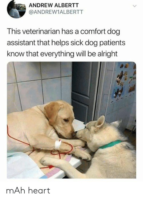 mah: ANDREW ALBERTT  @ANDREW1ALBERTT  This veterinarian has a comfort dog  assistant that helps sick dog patients  know that everything will be alright mAh heart