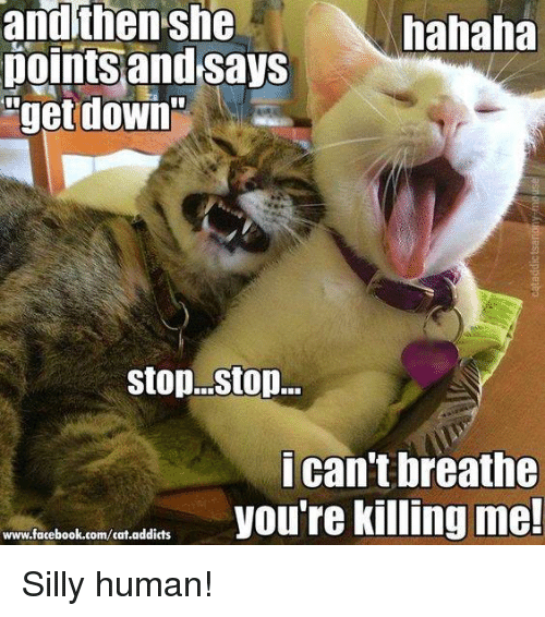 youre killing me: andthen she  hahaha  points and says  get down  Stop. Stop...  I can't breathe  you're killing me!  www.facebook.com/cat.addicts Silly human!