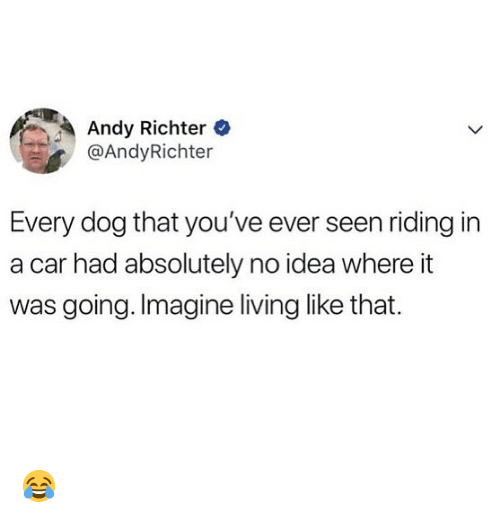 Memes, Living, and Andy Richter: Andy Richter  @AndyRichter  Every dog that you've ever seen riding in  a car had absolutely no idea where it  was going. Imagine living like that. 😂