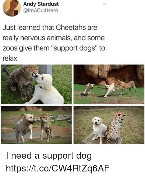 "Animals, Dogs, and Funny: Andy Stardust  @ImACultHero  Just learned that Cheetahs are  really nervous animals, and some  zoos give them ""support dogs"" to  relax I need a support dog https://t.co/CW4RtZq6AF"