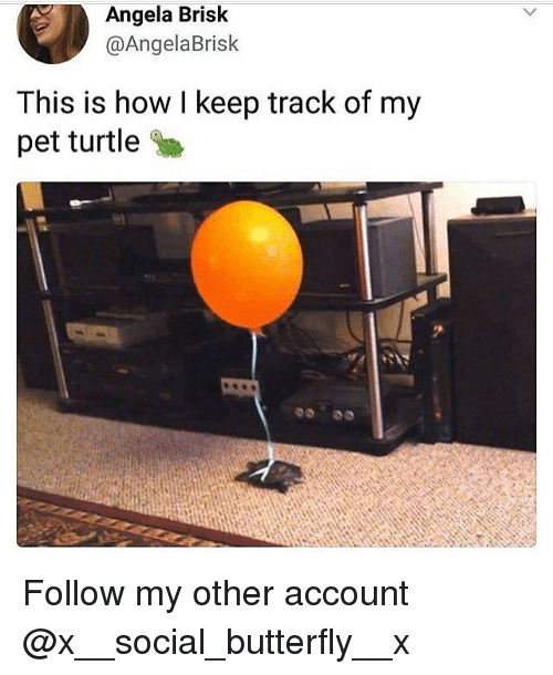 Memes, Butterfly, and Turtle: Angela Brisk  @AngelaBrisk  This is how l keep track of my  pet turtle Follow my other account @x__social_butterfly__x