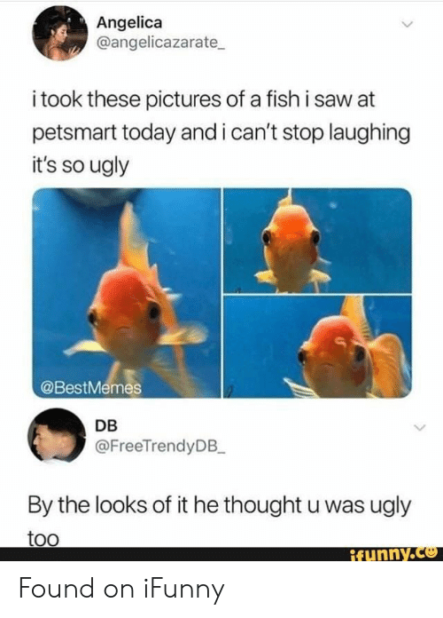 i cant stop: Angelica  @angelicazarate  i took these pictures of a fish i saw at  petsmart today and i can't stop laughing  it's so ugly  @BestMemes  DB  @FreeTrendyDB_  By the looks of it he thought u was ugly  too  ifynny.co Found on iFunny