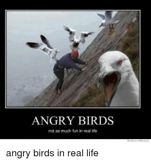 Funny Meme Real Life : Angry birds not as much fun in real life we know memes