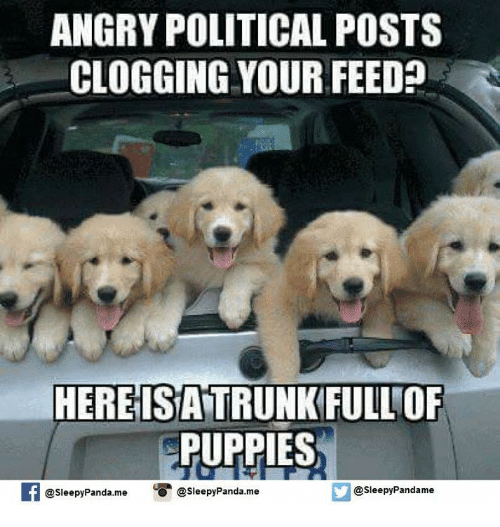 Memes, Puppies, and Panda: ANGRY POLITICAL POSTS  CLOGGING YOUR FEED  HERE ISATRUNKFULLOF  PUPPIES  If @Sleepy Panda.mee  Sleepy Pandame  O @Sleepy Panda me