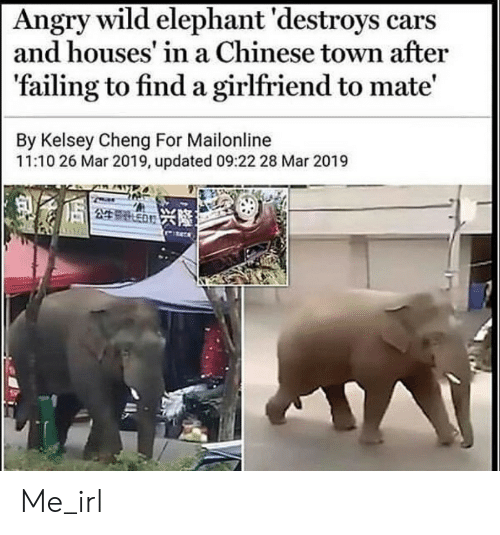 failing: Angry wild elephant 'destroys cars  and houses' in a Chinese town after  'failing to find a girlfriend to mate'  By Kelsey Cheng For Mailonline  11:10 26 Mar 2019, updated 09:22 28 Mar 2019  249 ED Me_irl