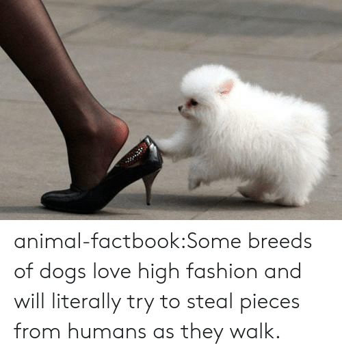 high fashion: animal-factbook:Some breeds of dogs love high fashion and will literally try to steal pieces from humans as they walk.