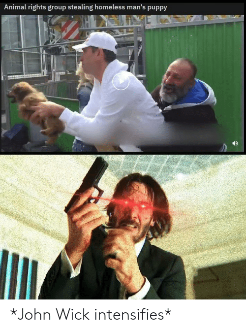 john wick: Animal rights group stealing homeless man's puppy *John Wick intensifies*