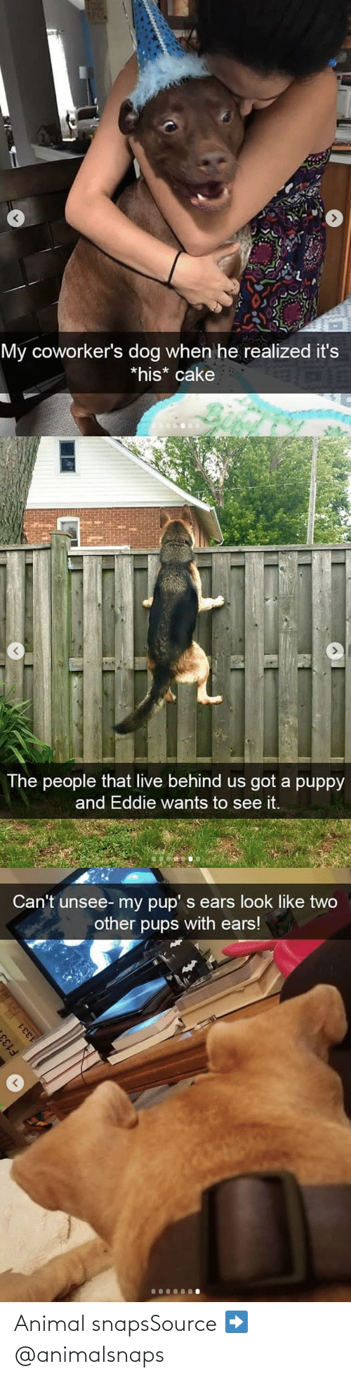 Animal: Animal snapsSource ➡️ @animalsnaps​