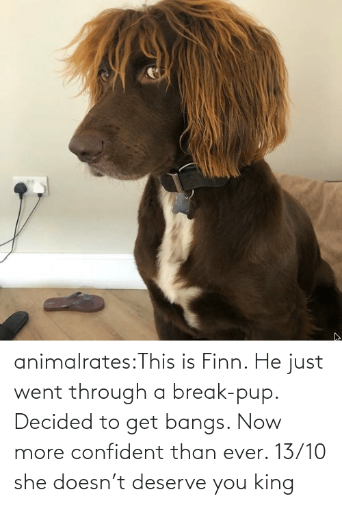 PUP: animalrates:This is Finn. He just went through a break-pup. Decided to get bangs. Now more confident than ever. 13/10 she doesn't deserve you king