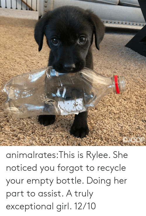 exceptional: animalrates:This is Rylee. She noticed you forgot to recycle your empty bottle. Doing her part to assist. A truly exceptional girl. 12/10