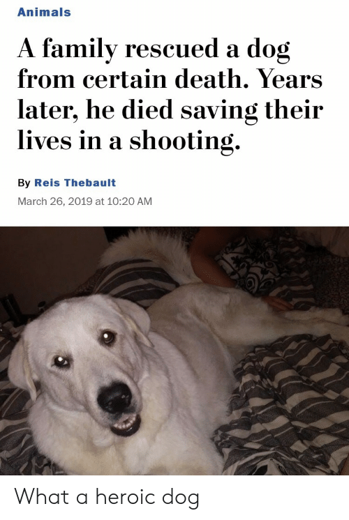 Heroic: Animals  A familv rescued a dog  from certain death. Years  later, he died saving their  lives in a shooting.  By Reis Thebault  March 26, 2019 at 10:20 AM What a heroic dog