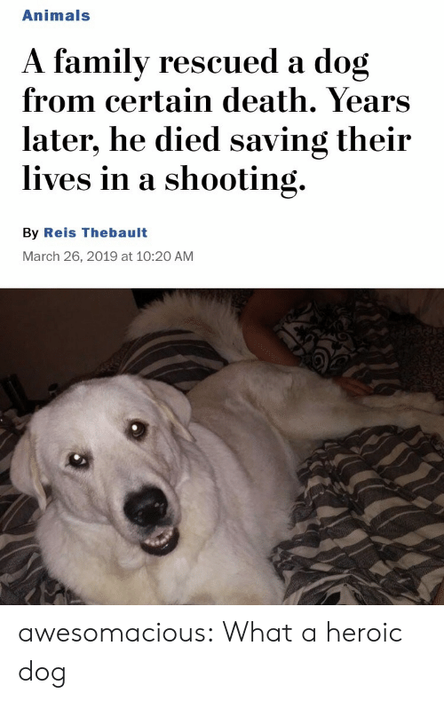 Heroic: Animals  A familv rescued a dog  from certain death. Years  later, he died saving their  lives in a shooting.  By Reis Thebault  March 26, 2019 at 10:20 AM awesomacious:  What a heroic dog