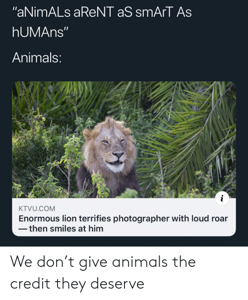 """photographer: """"aNimALs aReNT aS smArT As  hUMAns""""  Animals:  KTVU.COM  Enormous lion terrifies photographer with loud roar  then smiles at him We don't give animals the credit they deserve"""