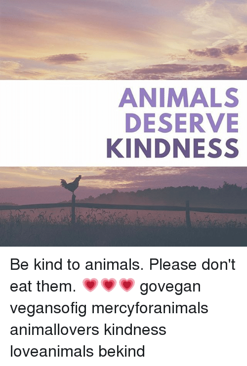 Kindness: ANIMALS  DESERVE  KINDNESS Be kind to animals. Please don't eat them. 💗💗💗 govegan vegansofig mercyforanimals animallovers kindness loveanimals bekind