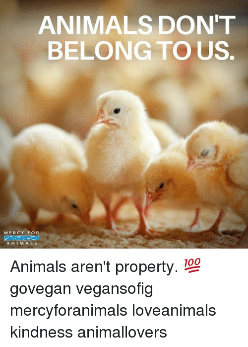 Kindness: ANIMALS DON'T  BELONG TO US.  MERCY FOR  A N I M A L S Animals aren't property. 💯 govegan vegansofig mercyforanimals loveanimals kindness animallovers