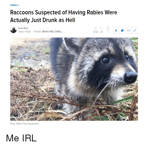 raccoons: ANIMALS  Raccoons Suspected of Having Rabies Were  Actually Just Drunk as Hell  Catie Keck  Today 1:15am . Filed to: DRUNK RACCOONS﹀  31.5K 24 1f  Photo: Mlton Police Department Me IRL