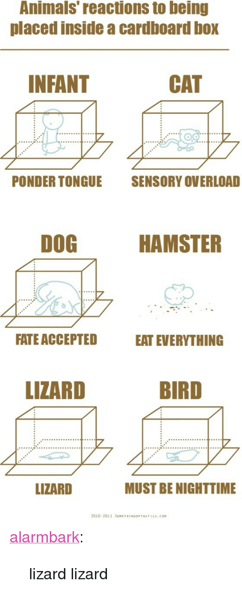 "Animals, Target, and Tumblr: Animals reactions to being  placed inside a cardboard box  NFANT  CAT  PONDER TONGUE  SENSORY OVERLOAD  DOG  HAMSTER  FATE ACCEPTED  EAT EVERYTHING  LIZARD  BIRD  LIZARD  MUST BE NIGHTTIME  2010 2011 SOMETHINGOPTHATILK.COM <p><a class=""tumblr_blog"" href=""http://alarmbark.tumblr.com/post/49119935278/lizard-lizard"" target=""_blank"">alarmbark</a>:</p> <blockquote> <p>lizard lizard</p> </blockquote>"