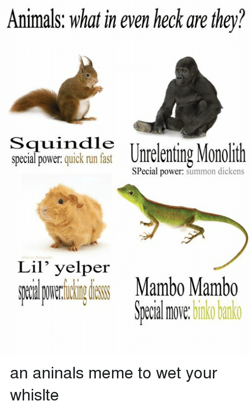 Running Fast: Animals: what in even heck are they?  Squindie  special power  quick run fast  Unrelenting Monollth  Special power  summon dickens  Lil' yelper  Mambo Mambo  move.  binko banko an aninals meme to wet your whislte