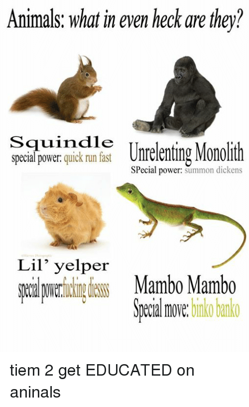 Running Fast: Animals: what in even heck are they?  Squindie  special power  quick run fast  Unrelenting Monollth  Special power  summon dickens  Lil' yelper  Mambo Mambo  move.  binko banko tiem 2 get EDUCATED on aninals