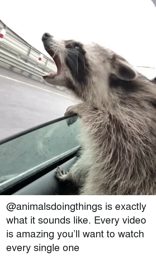 Memes, Video, and Watch: @animalsdoingthings is exactly what it sounds like. Every video is amazing you'll want to watch every single one