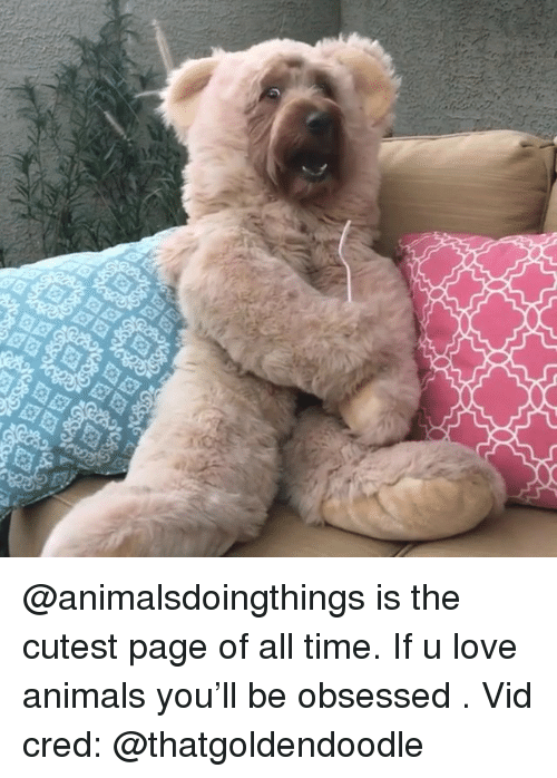 Animals, Love, and Time: @animalsdoingthings is the cutest page of all time. If u love animals you'll be obsessed . Vid cred: @thatgoldendoodle