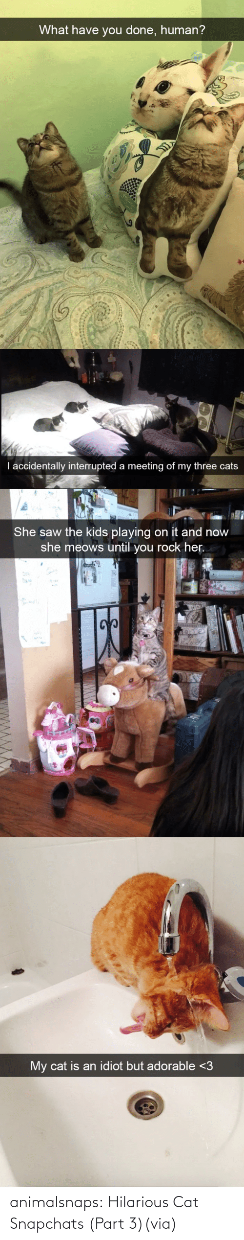 Forever: animalsnaps:  Hilarious Cat Snapchats (Part 3)(via)