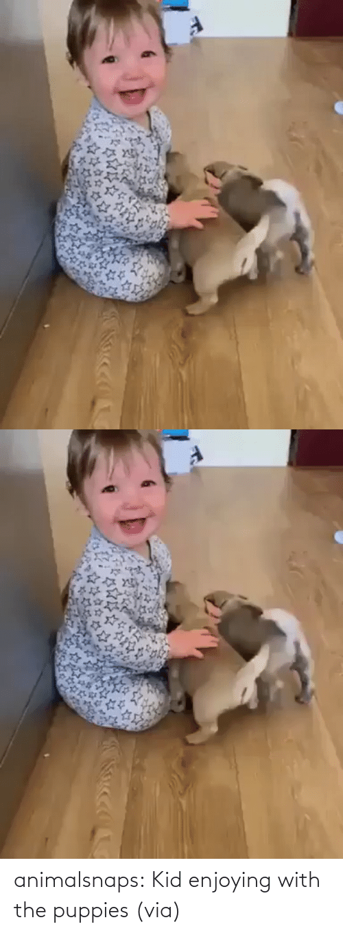 kid: animalsnaps:  Kid enjoying with the puppies (via)