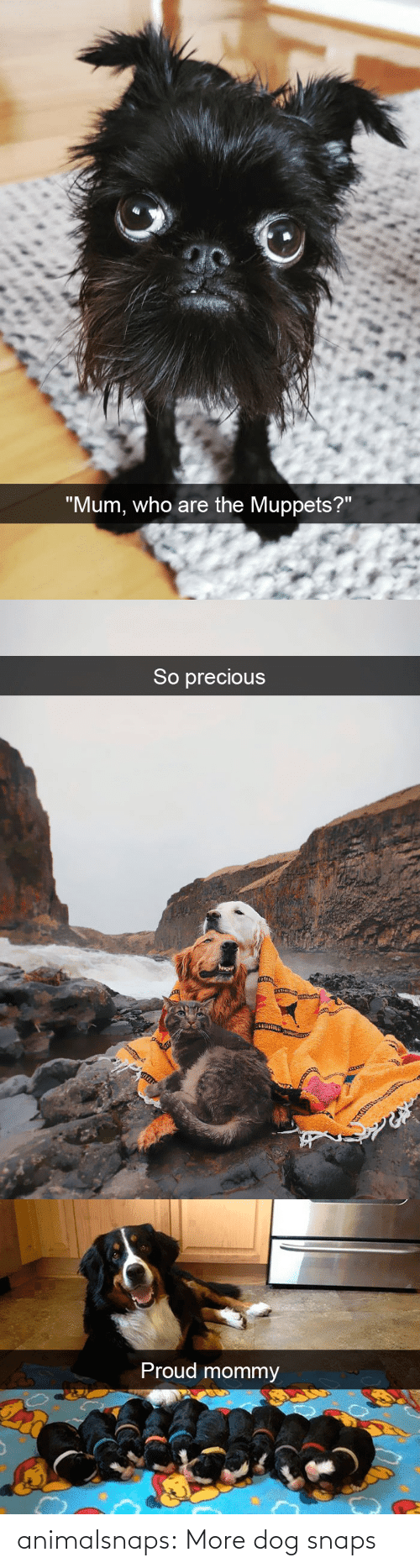 Dog: animalsnaps:  More dog snaps